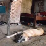 my-dog-blanca