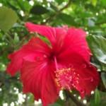 beautiful-flowers-2